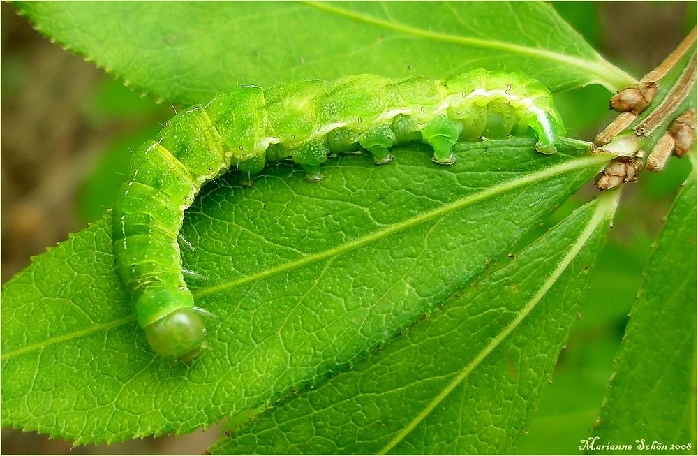neon gr n foto bild tiere wildlife insekten bilder auf fotocommunity. Black Bedroom Furniture Sets. Home Design Ideas