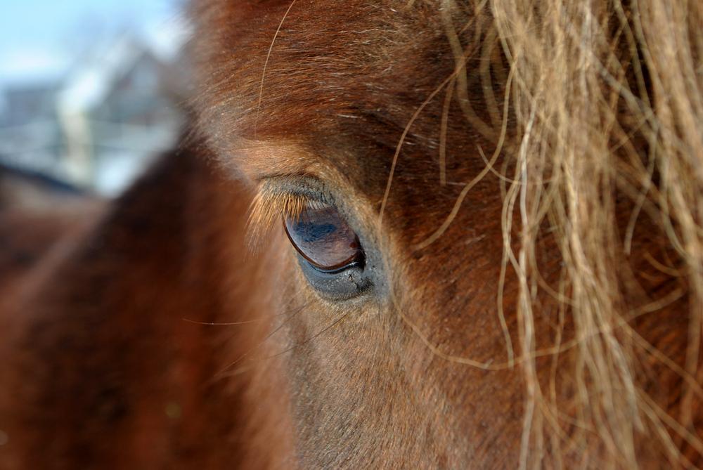 Nero's Auge...