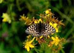 Nervöser Schmetterling ?