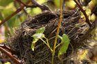 Nest 1, Baum 4