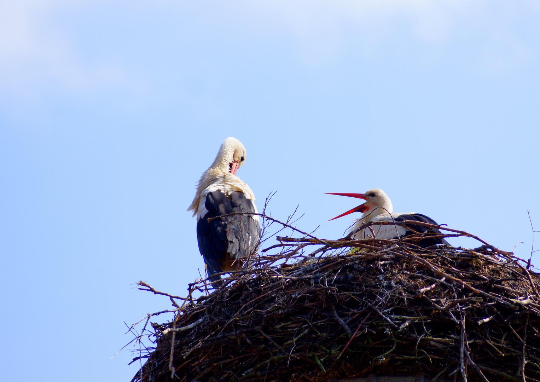 Nest bezogen