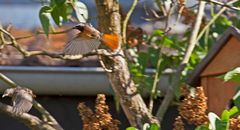 Nest verlassen