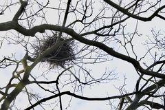 Nest-Wärme