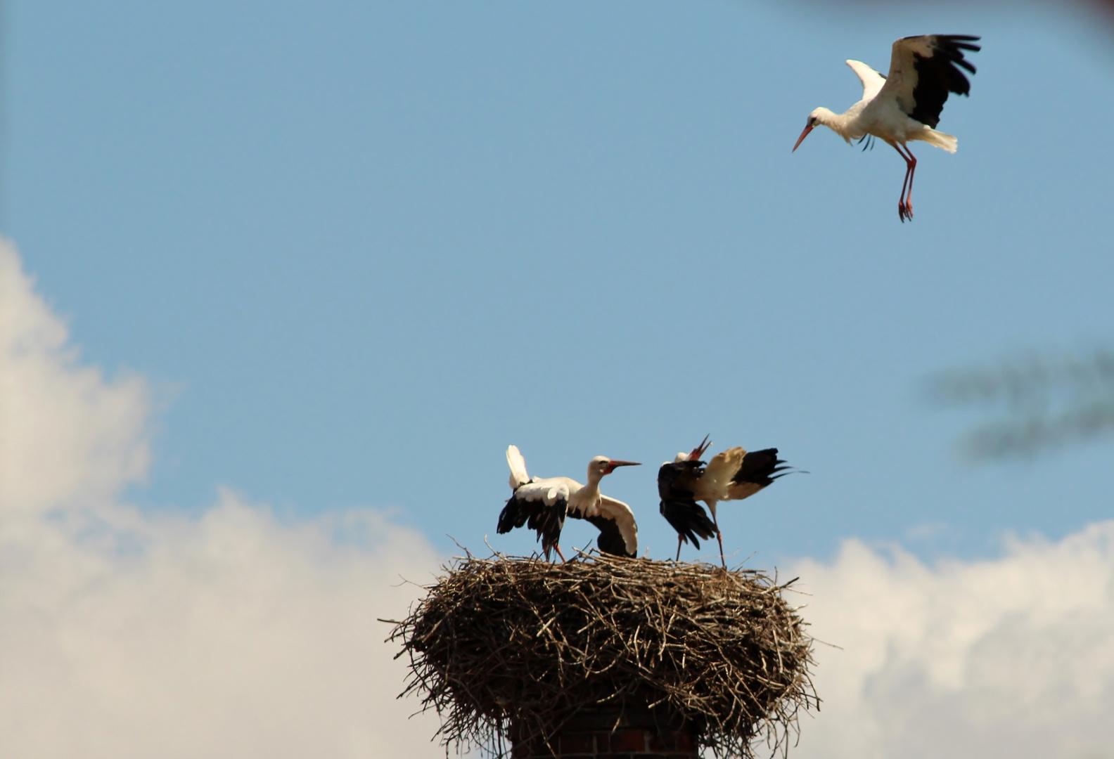 Nestbesetzung abgewehrt