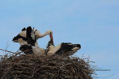 Nestpflege