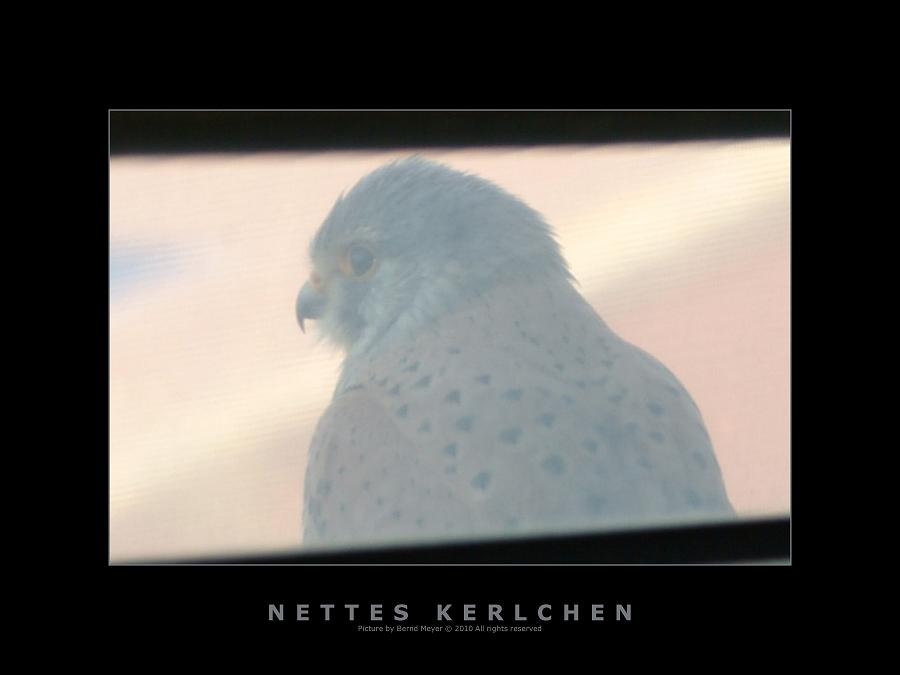 Nettes Kerlchen...