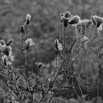 Network Natur II