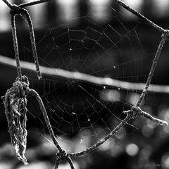 """""""Netz im Netz"""""""