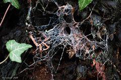 Netz im Wald