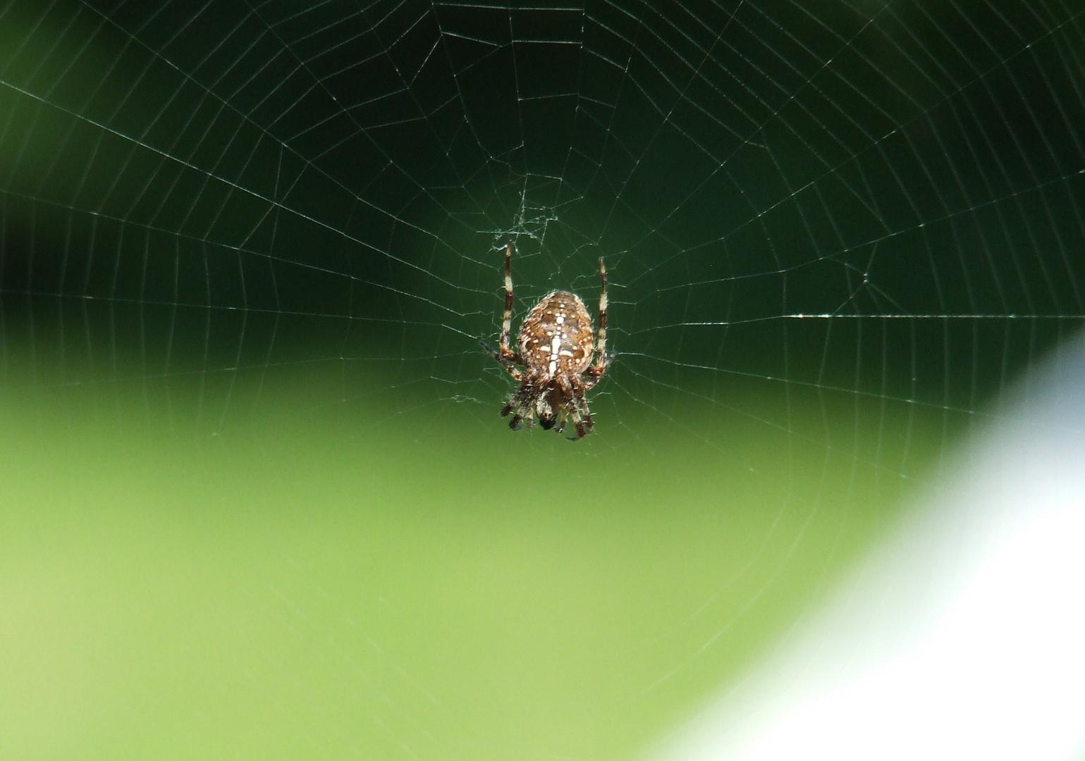 Netz und Spinne