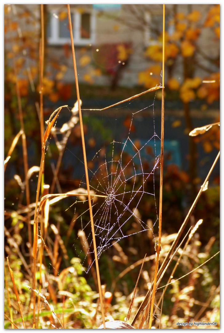 Netzwerke der Natur