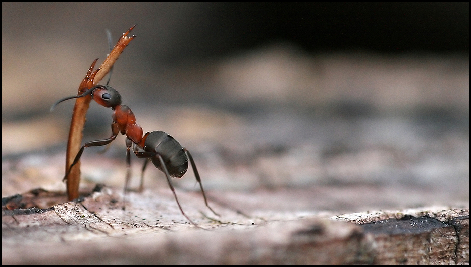 NEU Ameisenreport aus dem Fläming (Teil 1 von 5)