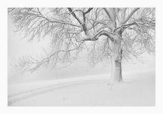 Neu - Schnee