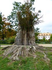 Neuanpflanzung im Fürst-Pückler-Park, Bad Muskau