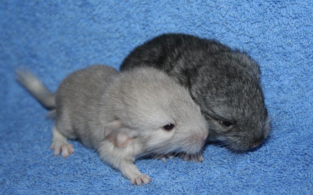 Neue Babys