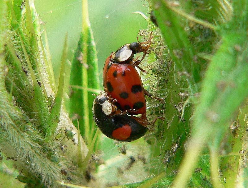 Neue Käfer braucht das Land!