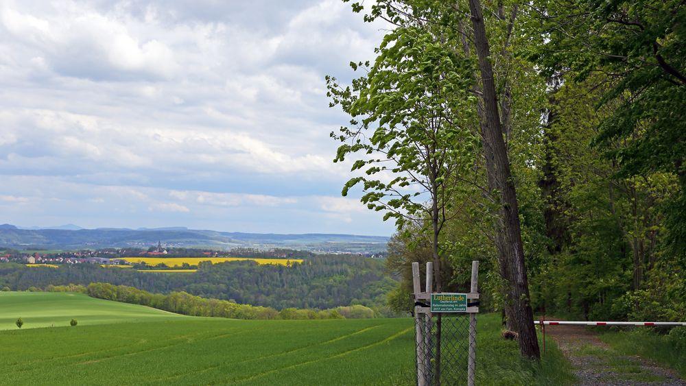 Neue Lutherlinde bei Schmorsdorf