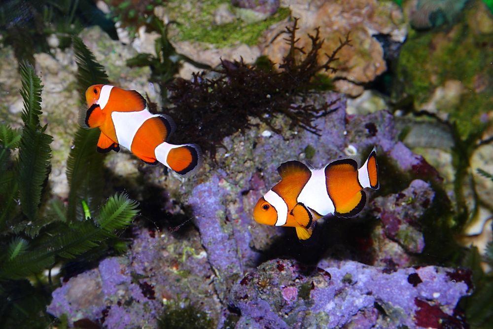 Neue Mitbewohner - Nemo und Jenny (laut Tochter)