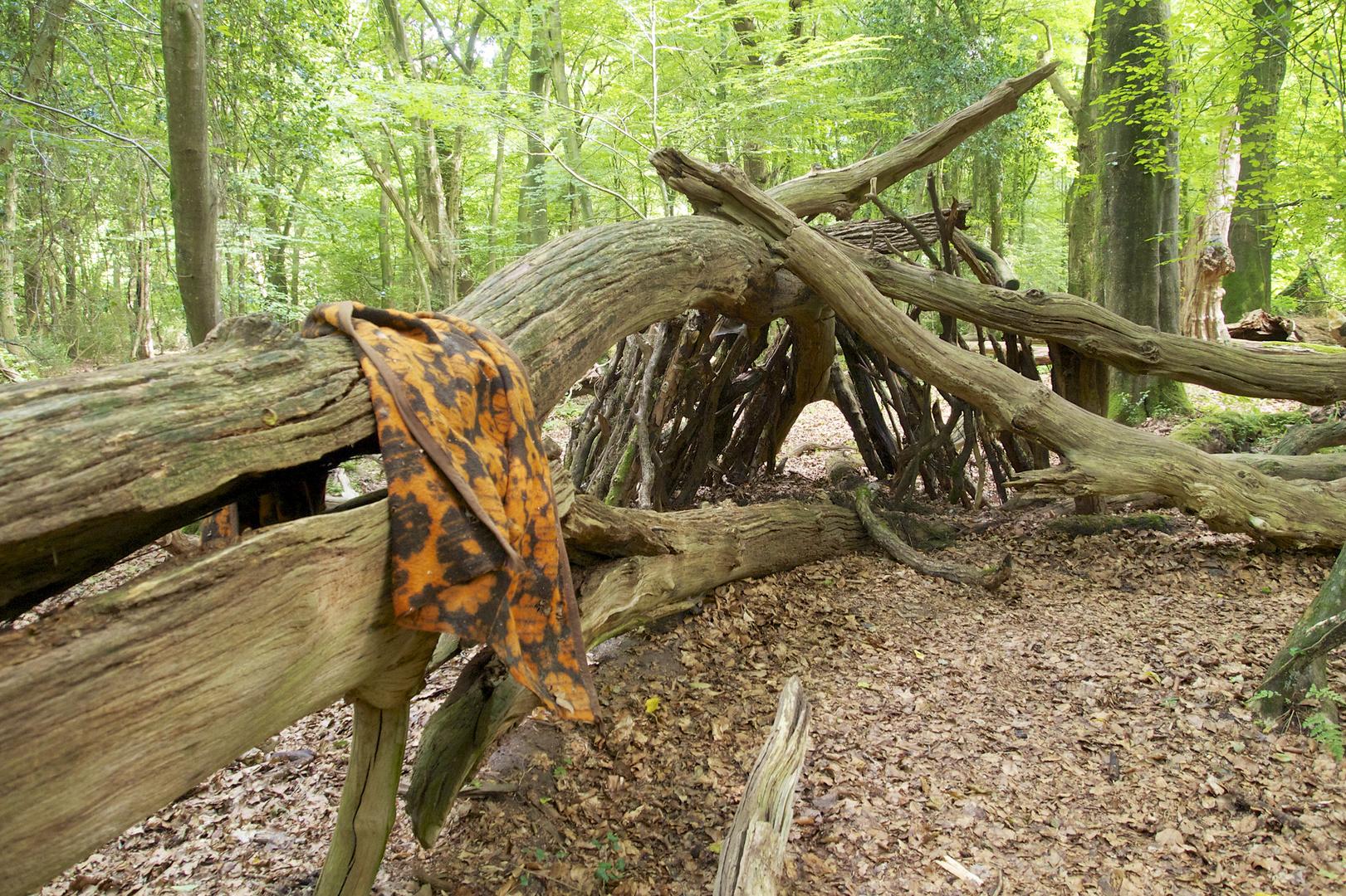 Neuenburger Urwald 3