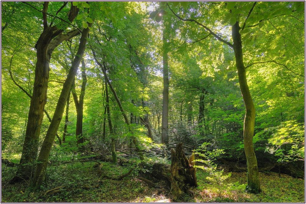 Urwald In Deutschland
