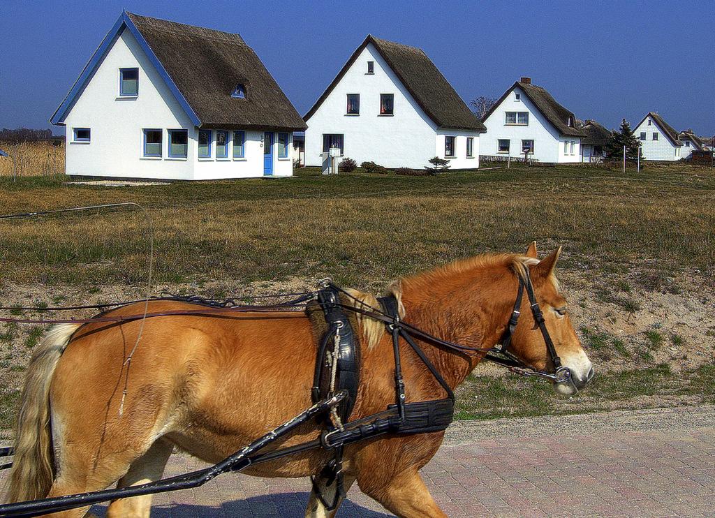 Neuendorf und seine Häuser