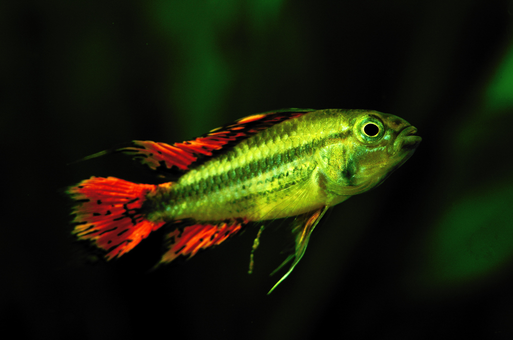 Neuer Fisch Im Aquarium Foto Bild Tiere Haustiere Aquaristik