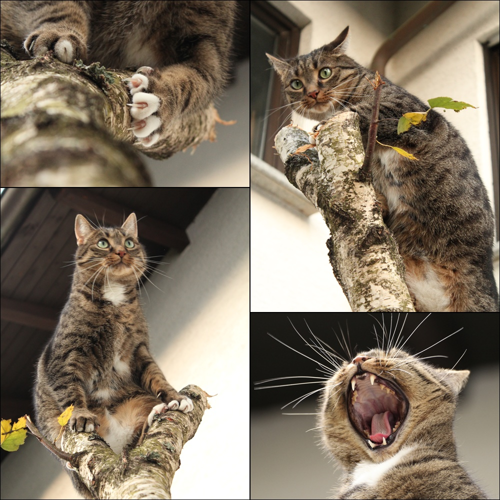 Neues aus dem Katzengarten....