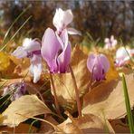 Neues aus meinem Garten 11/IV - Vom Sommer bis in den Winter...- reload