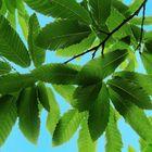 Neues Grün, neue Hoffnung