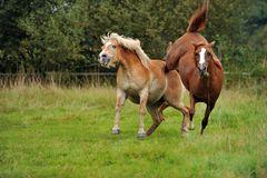Neues Pferd auf der Weide