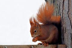Neues vom Hörnchen