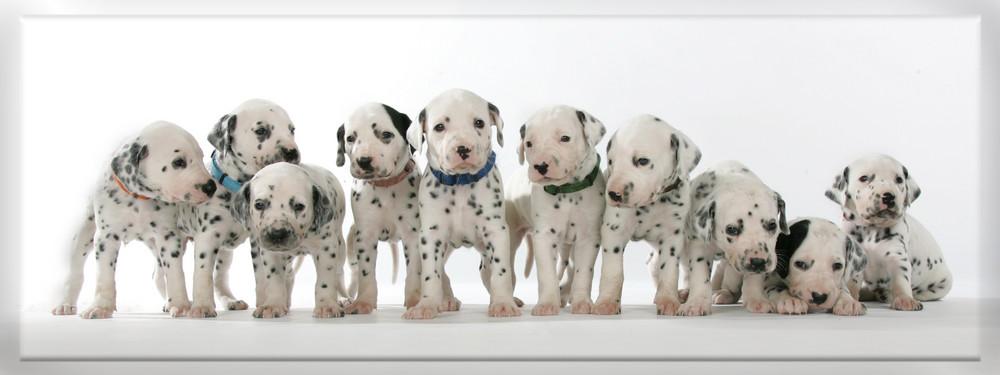 Neues vom Hundehaufen :-)
