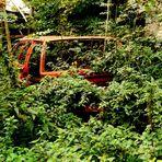 Neues vom Opeltorso - Bulletin 2012