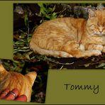 Neues von Tommy