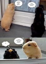 Neues von Wuschi und Kiki :o)