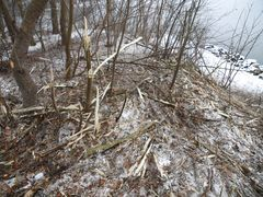 Neueste Böschungspflege am Nord-Ostsee-Kanal ??