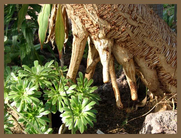 Neueste Genetische Errungenschaft - Der Kuhbaum