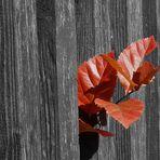 Neugierige Blätter