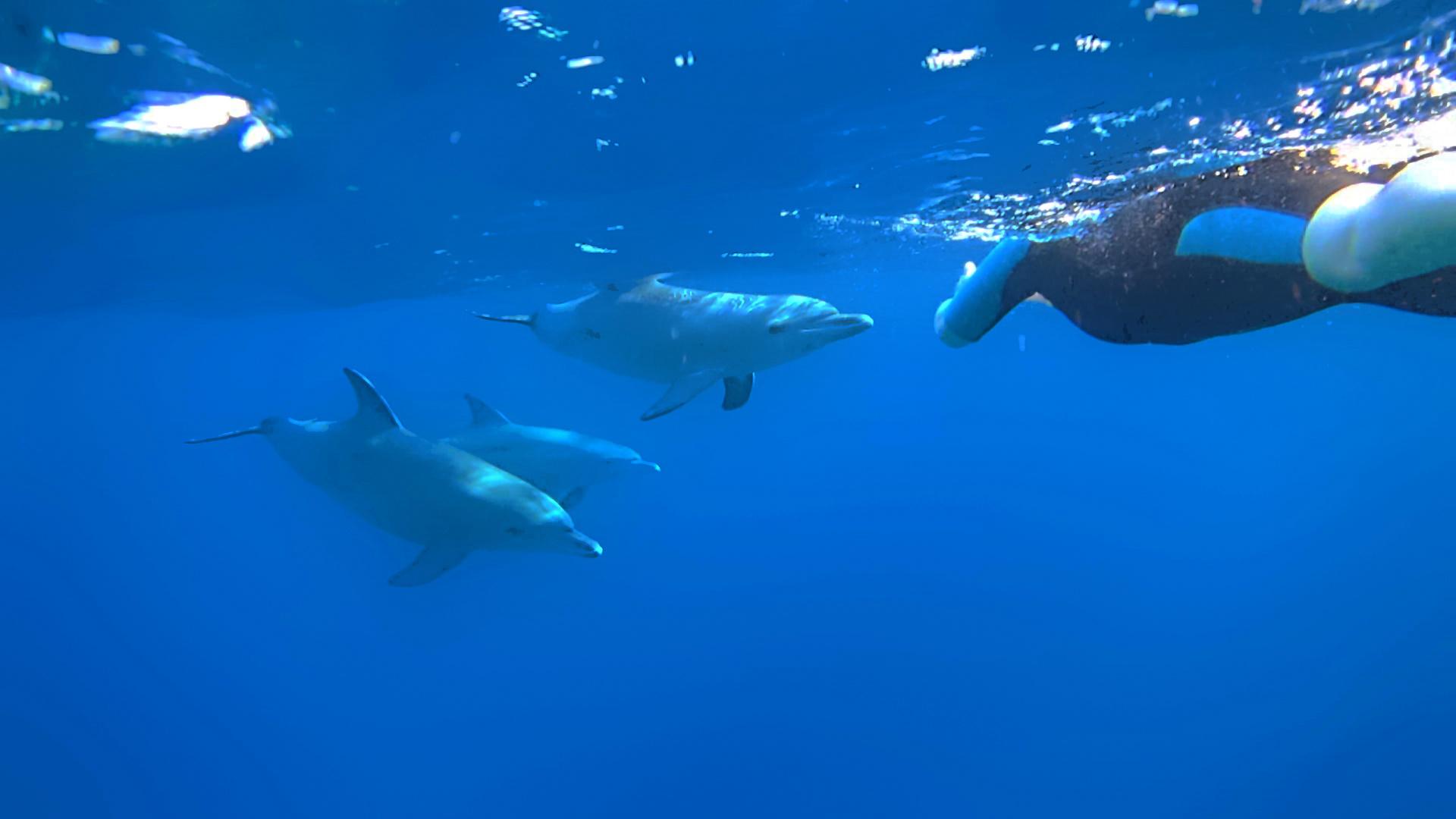 Neugierige Delfine am Außenriff.