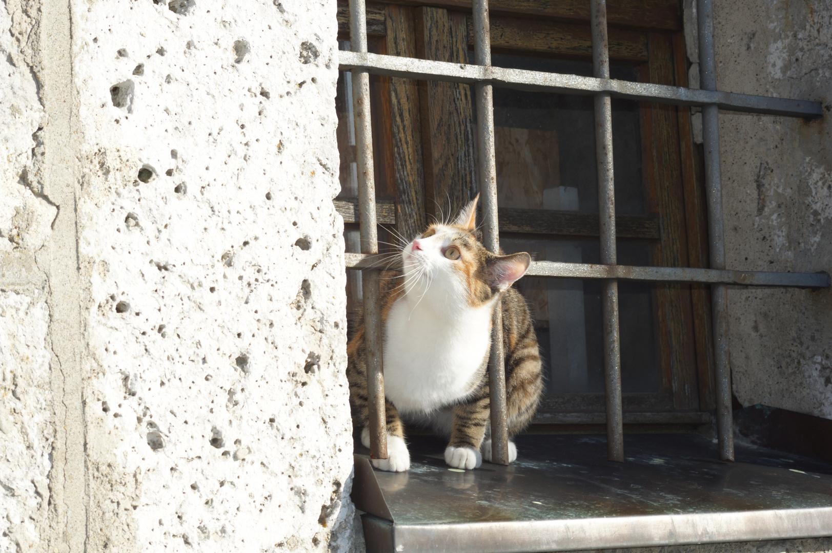 neugierige Katze . . . . . . .
