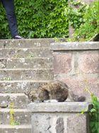 neugierige Katze