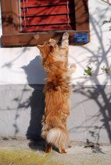 Neugieriger Isidor