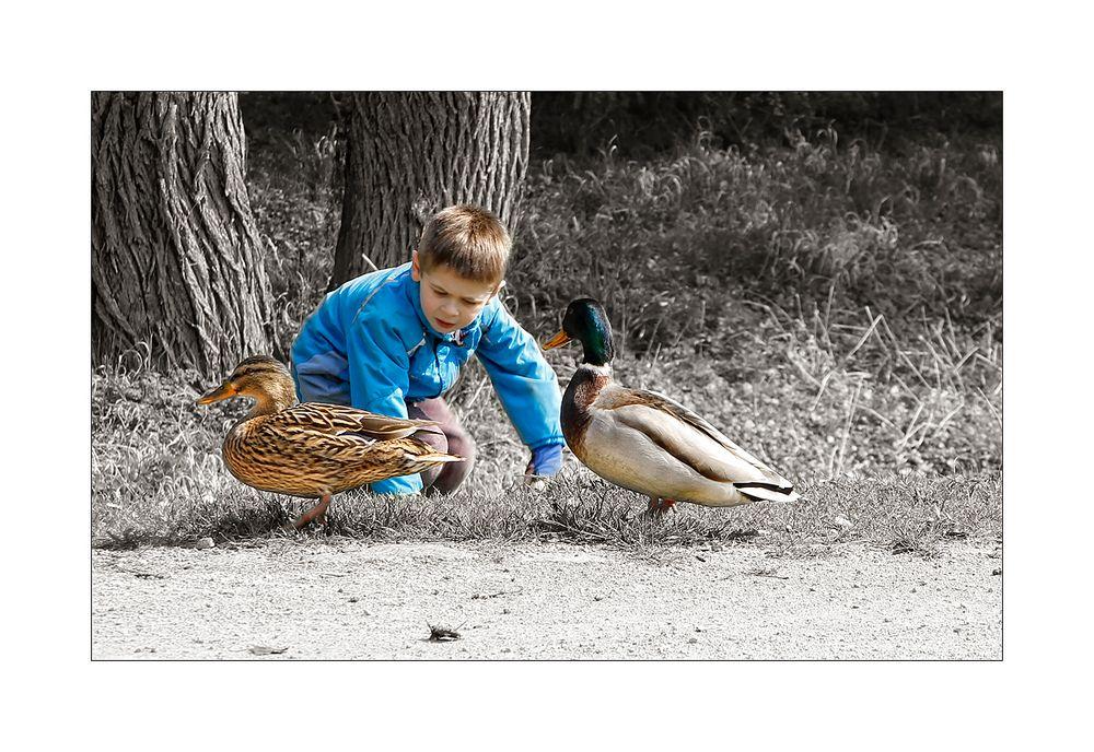 neugieriges Entenpaar