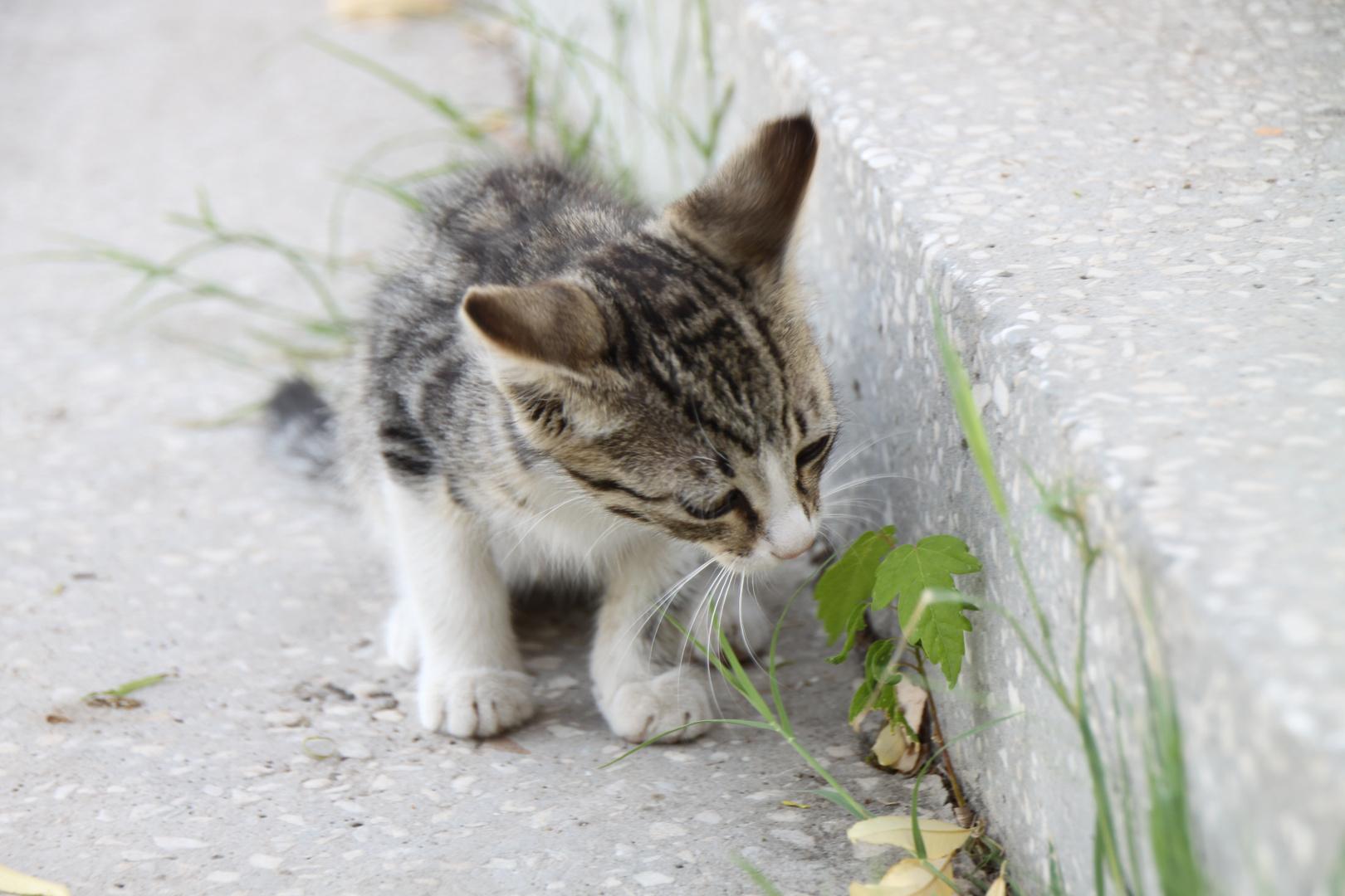 neugieriges Katzenbaby
