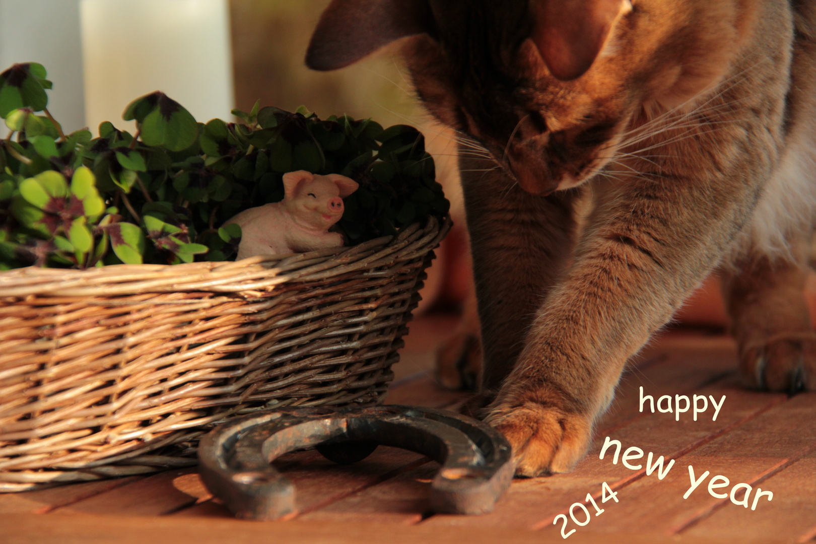 Neujahrsgrüße von Hannah..........