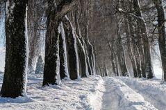 Neujahrstag im Schnee