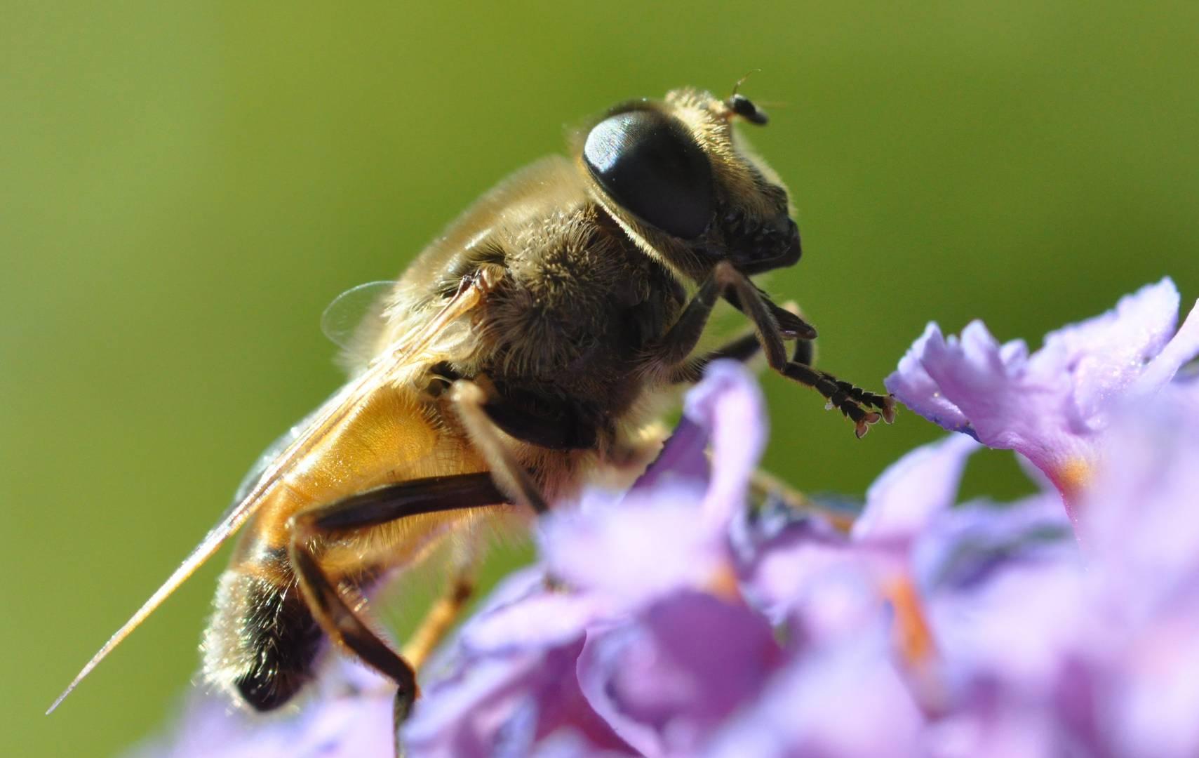 neulich auf dem Schmetterlingsstrauch