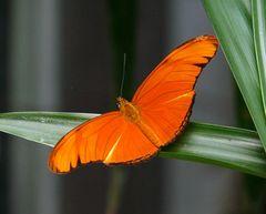 Neulich bei den Schmetterlingen..
