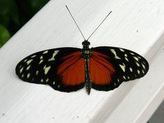 Neulich bei den Schmetterlingen..2