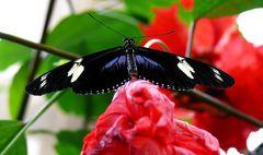 Neulich bei den Schmetterlingen..3